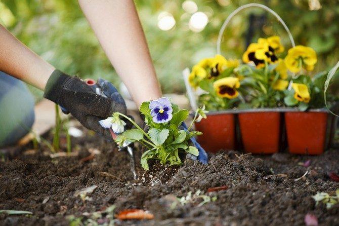 Выращивание комнатных и садовых растений